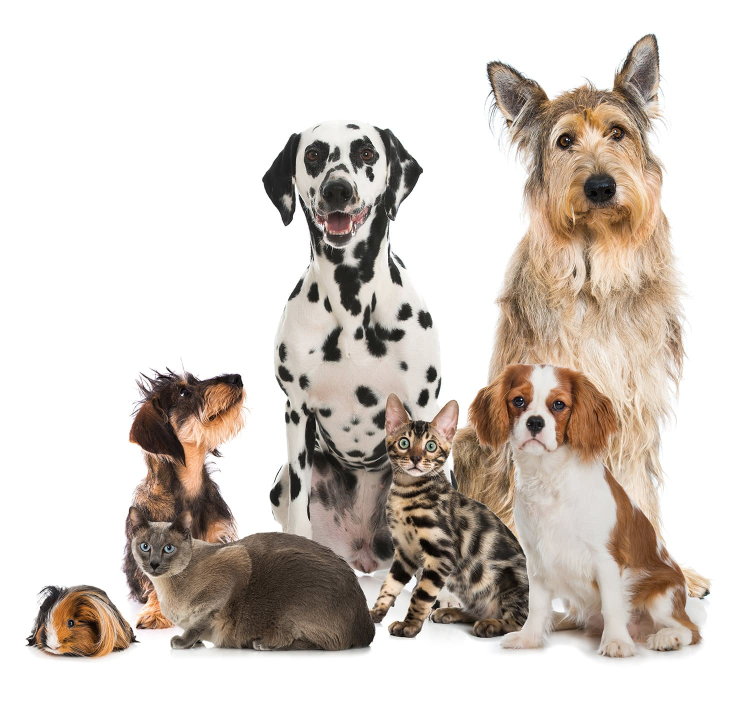 Willkommen | Tierärztliche Gemeinschaftspraxis Roman Thissen & Dr. Corinna Weber Alzey