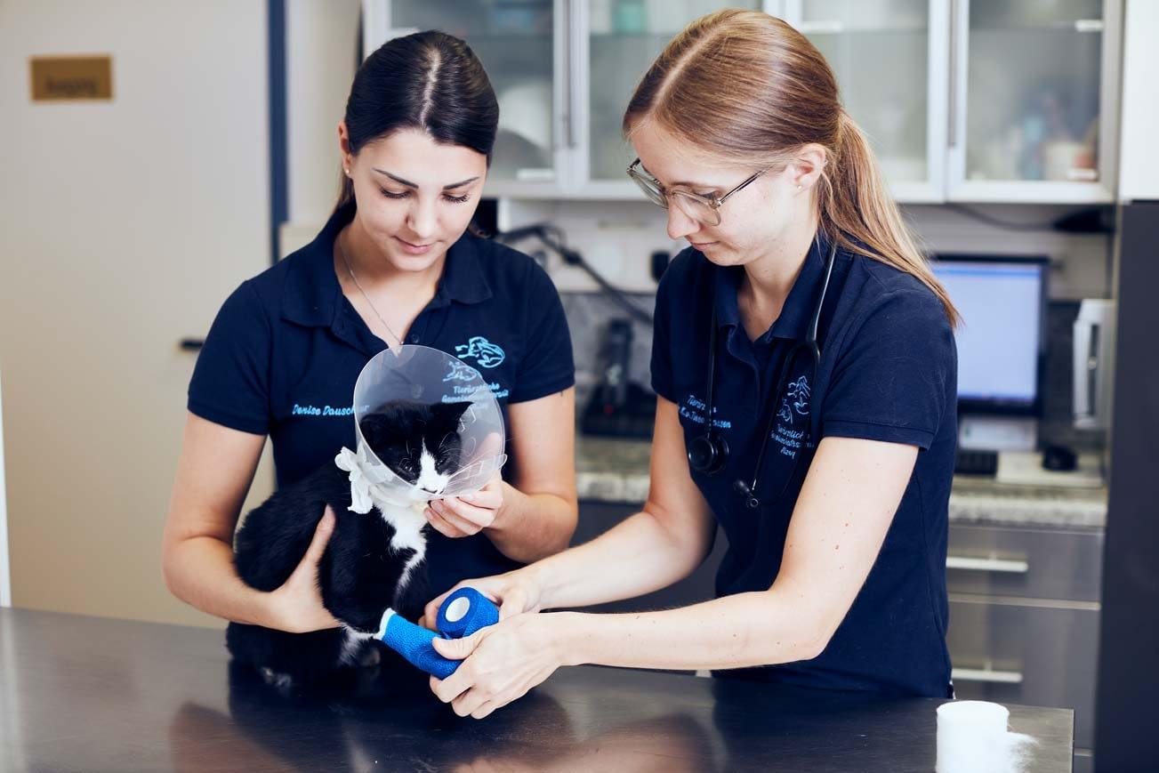 Bewerben - Tierärztliche Gemeinschaftspraxis Roman Thissen & Dr. Corinna Weber Alzey