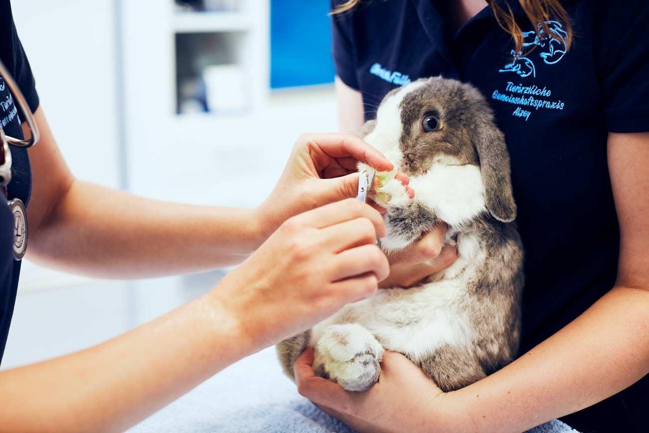 Behandlung - Tierärztliche Gemeinschaftspraxis Roman Thissen & Dr. Corinna Weber Alzey