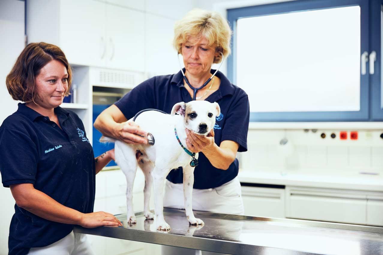 Tiermedizin - Tierärztliche Gemeinschaftspraxis Roman Thissen & Dr. Corinna Weber Alzey